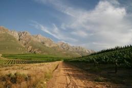 Weinprobe im Piccola Köln: Weinberge in Südafrika